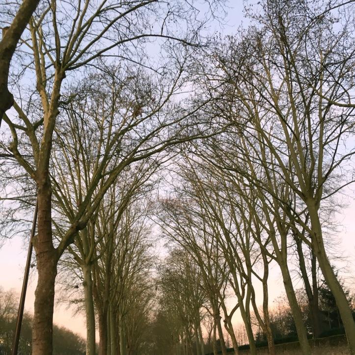 Jogging avenue de Paris (15)