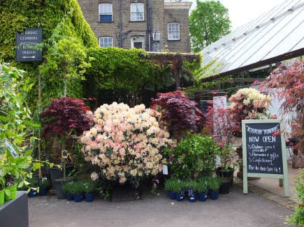 Clifton Nurseries © Corinne Martin-Rozès 19