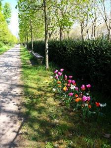 Parc de Madame Elisabeth Versailles © CorinneMartinRozès (21)