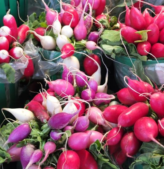 marche-jean-talon_montreal-corinne-martin-rozes-6